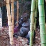 ภาพถ่ายของ Lincoln Park Zoo