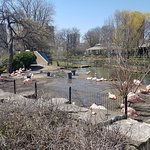 Photo of Lincoln Park Zoo
