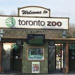 Bild från Toronto Zoo