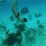 Foto di Acquarius Sea Tours