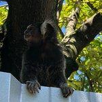 Foto de Rio Zoo