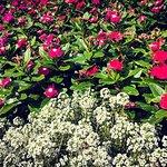 Foto Colac Botanic Gardens