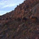 ภาพถ่ายของ South Kaibab Trail