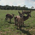 Φωτογραφία: Lion Country Safari