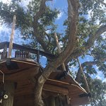 Foto di Norwood's Eatery & Bar Treehouse