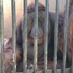 Φωτογραφία: Suncoast Primate Sanctuary Foundation, Inc.
