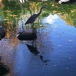 Foto di Kyoto Garden