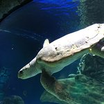 Billede af SEA LIFE Orlando Aquarium