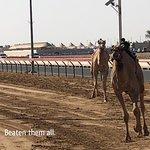 Foto di Dubai Camel Racing Club