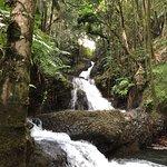 Foto de Hawaii Tropical Botanical Garden
