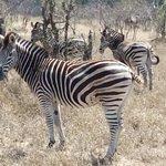 Foto de Kruger National Park