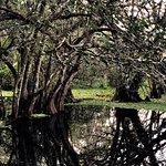 Foto de Corkscrew Swamp Sanctuary