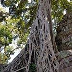 Фотография Храм Та Прохм