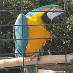 Foto van Viveiro, Botanical Garden & Zoo di Terra
