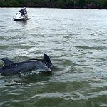 Φωτογραφία: Capt. Ron's Awesome Everglades Adventures
