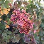 Фотография Peju Province Winery