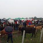 Animal fair in Maramures