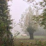Фотография Дом и сады Клода Моне