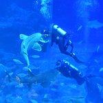 Photo of S.E.A. Aquarium