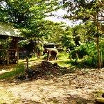 Foto van Elephant Village