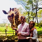 Bild från Giraffe Centre