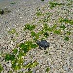 Billede af Turtle Conservation and Education Centre