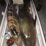 Φωτογραφία: Mojo Sport Fishing and Tours