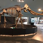 Photo of La Brea Tar Pits and Museum