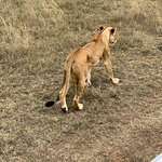 Φωτογραφία: Nairobi National Park