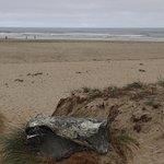 Zdjęcie Bastendorff Beach