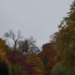 Billede af English Garden