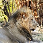Wilderness Safaris Ruckomechi Camp Picture