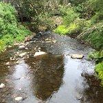 Healesville Sanctuary Foto