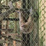 Amazon Rescue Center Foto
