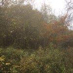 Foto de Salcey Forest
