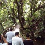 Arenal Hanging Bridges Foto