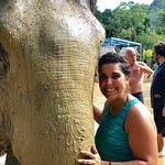 Green Elephant Sanctuary Park Foto