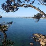 Billede af Orokawa Scenic Reserve