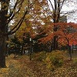 Nakajima Park Foto