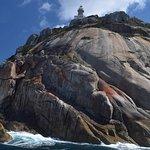 Bilde fra Wildlife Coast Cruises