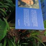 Foto de Museu Frida Kahlo