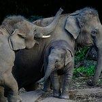 Prohlídky přírodních oblastí apozorování divoké zvěře
