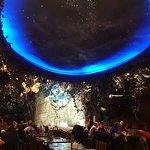 Rainforest Café의 사진