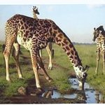 Zdjęcie Wildlife Sun Safaris