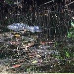Imagen de Everglades Rentals & Eco Adventures
