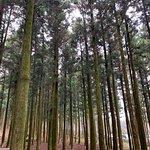 Foto di Jeolmul Natural Forest Resort