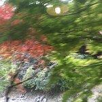 Foto de Arashiyama