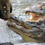 Photo of St. Augustine Alligator Farm Zoological Park