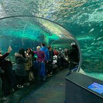Foto de Ripley's Aquarium Of Canada