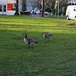 Billede af Standehauspark
